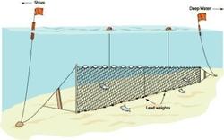 Liman Ağ - Fanyalı Profesyonel Turna Ağı 100 Metre 3 Numara İp Kalınlıklı